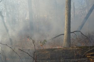 forest fire 34