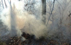 forest fire 36