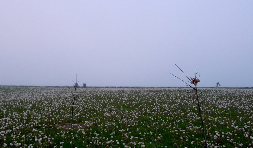FB DANDELIONS AND BICYCLE 2