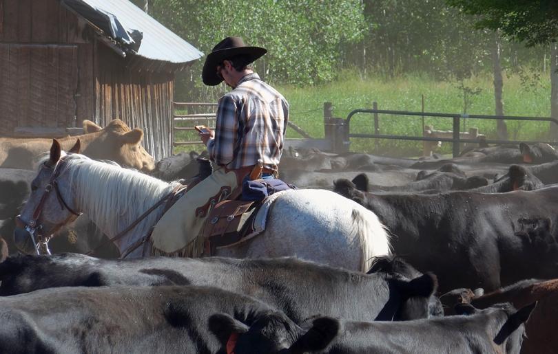 FB cowboy, texting 2