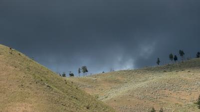 FB tree line w storm cloud
