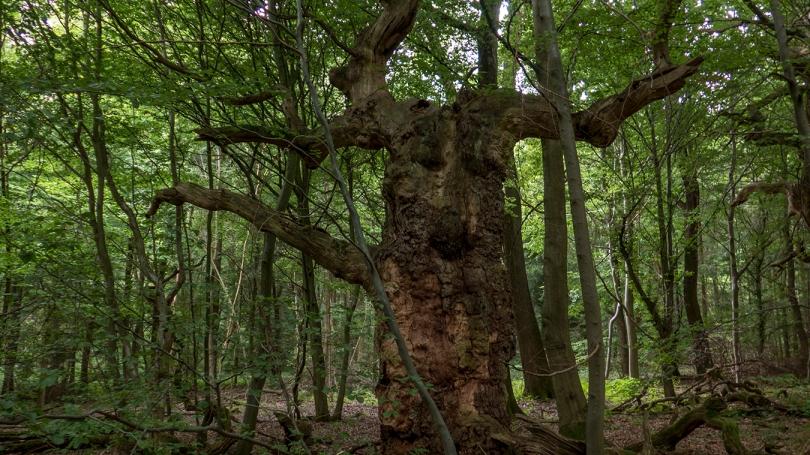 kassel tree 3