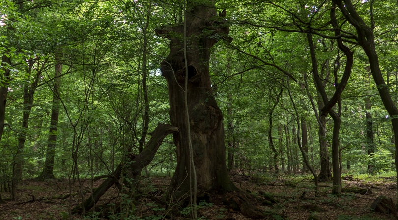 Kassel tree 4