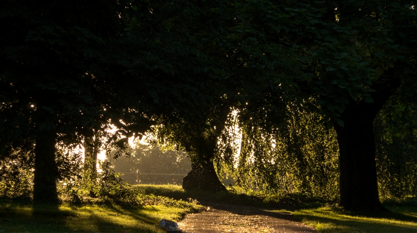 vichy trees and light