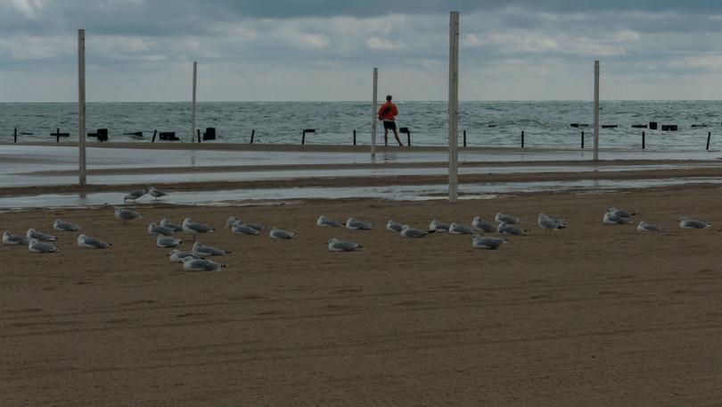 guard birds