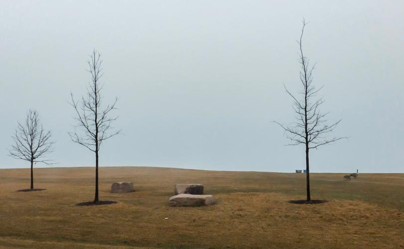 Fullerton fog day w geese