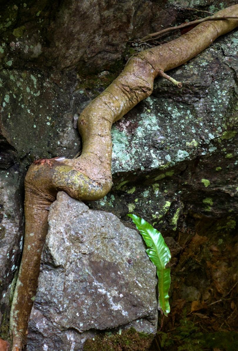 WP Greenway root