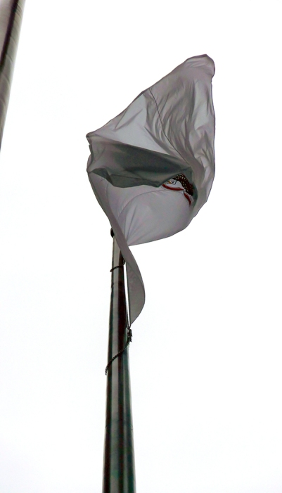 WP flag flower 10